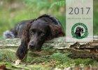 wachtelhund-kalender-