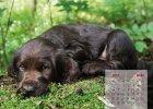 wachtelhund-kalender-03-maerz