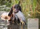 wachtelhund-kalender-okt