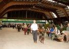 hauptversammlung-wachtelhund-2016-029