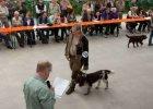 hauptversammlung-wachtelhund-2016-031