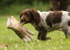 wachtelhund-welpe-handschuh