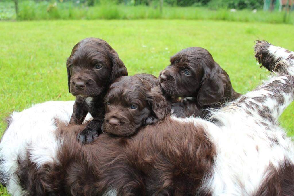 Hundevermittlung2