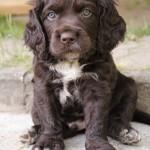 Hundevermittlung5