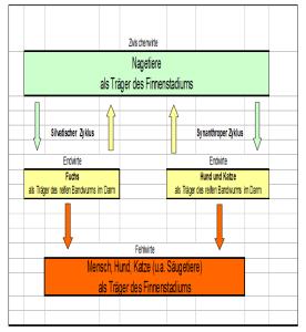 Entwicklungszyklus des E. multilocularis2