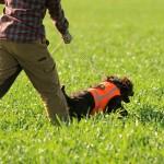wachtelhund-jugendpruefung-stoeberhund003