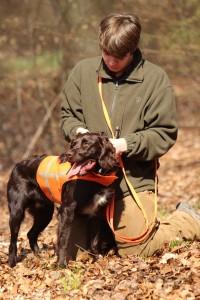 wachtelhund-jugendpruefung-stoeberhund012