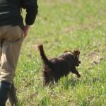 wachtelhund-jugendpruefung-stoeberhund017