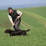wachtelhund-jugendpruefung-stoeberhund023