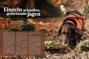 stoeberhund-wachtelhund-stoeberjagd-stoebern-2