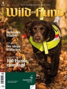 stoeberhund-wachtelhund-stoeberjagd-stoebern