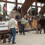 hauptversammlung-wachtelhund-2016-030