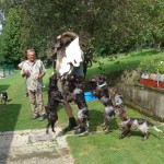 junghundtreffen-bayrischer-wald
