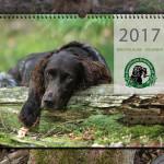 wachtelhundkalender-2017