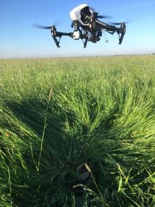 Drohne_ueber_Kitz